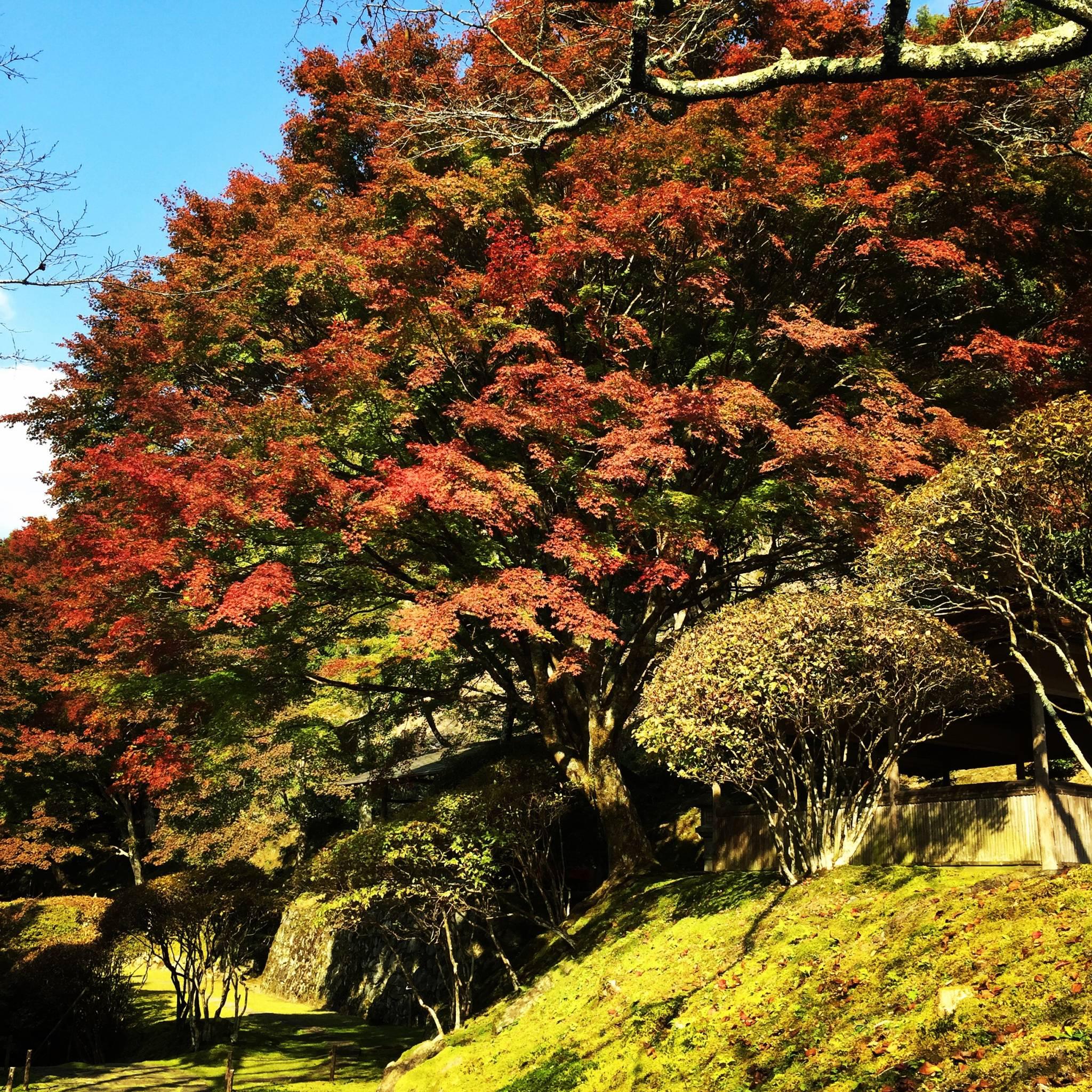 京都 白龍園