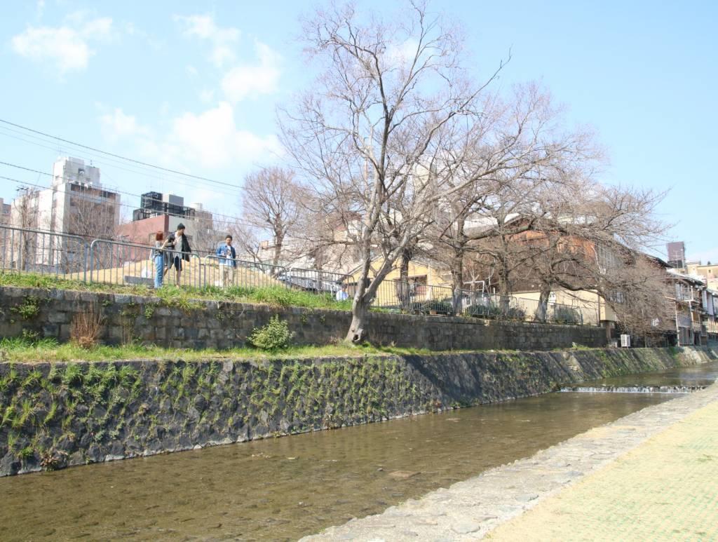 鴨川沿い(桜の木)